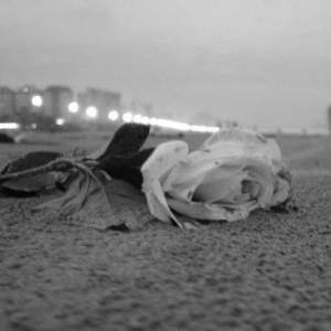 rosa_triste